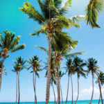 Palm trees aren't perfectly str8. Why should you be?