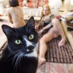 Eye Candy: Hot New Porn, Feline Photobomb